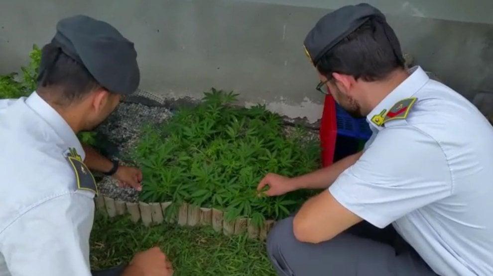 Lodi, coltivava marijuana utilizzando solo materiale biologico: arrestato 34enne
