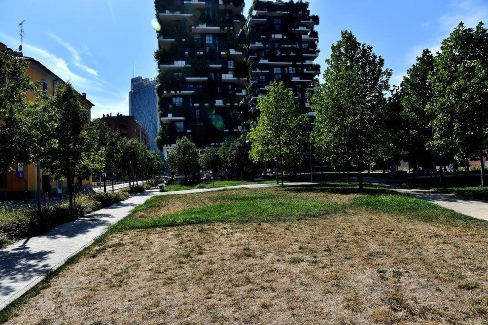 Milano, sole e caldo hanno bruciato l'erba: parchi e giardini diventano gialli