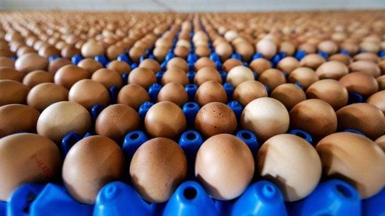 Bergamo, uova contaminate al fipronil: scatta il ritiro ma nessun rischio per la salute