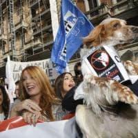 Debutta il Movimento animalista di Brambilla:
