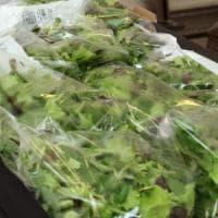 La Lombardia regina delle insalate in busta, qui il 70% della produzione