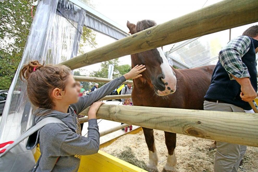 Milano, dagli animali ai prodotti dei campi: un weekend in fattoria in piazza Castello