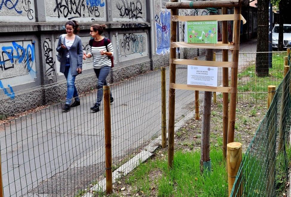 """Milano, dopo 10 anni di ricerche ritrovata """"l'erba dei cantanti"""": birra, miele e il sogno delle aiuole alla Scala"""