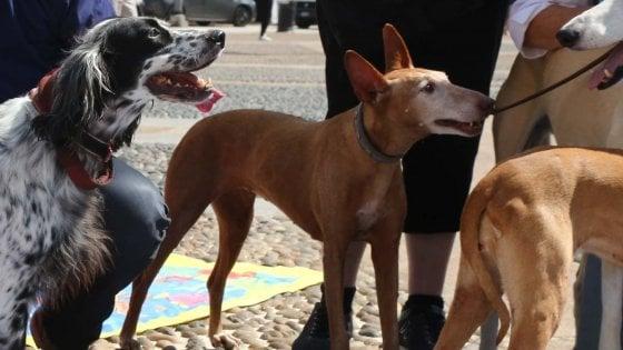 """Animali: con venti cani in casa, multata nel Bergamasco. """"Non più di dieci"""""""