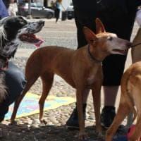 Animali: con venti cani in casa, multata nel Bergamasco.