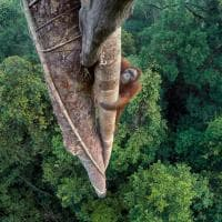 Wildlife Photographer of the Year, a Milano la natura selvaggia in mostra