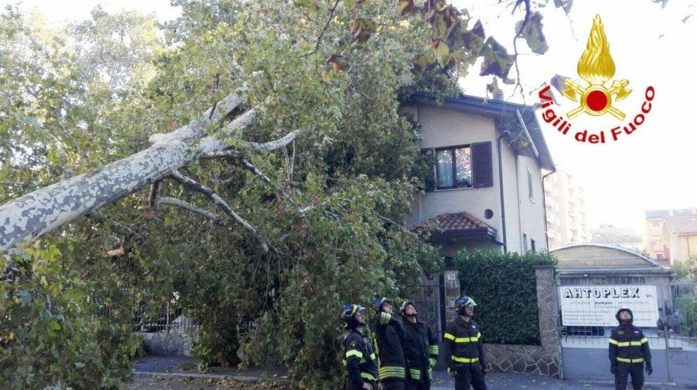 Sesto San Giovanni, vento sradica grosso albero: schiaccia Bmw poi si schianta su villetta
