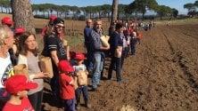 A Bereguardo la semina dei cereali per conoscere un'agricoltura più sana