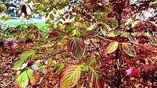 La magia dell'autunno  Il foliage al Sempione