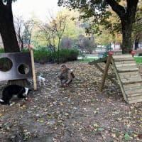Milano, due nuove aree giochi per i cani: quella al Sempione rinasce grazie ai volontari