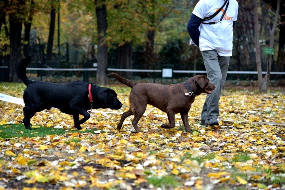 Milano, ecco la nuova area cani nel Parco Sempione: c'è ...