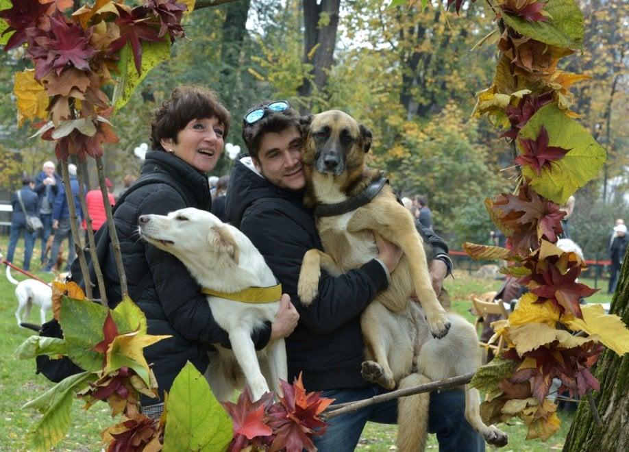 Milano, ecco la nuova area cani nel Parco Sempione: c'è anche il kit di primo soccorso per gli animali