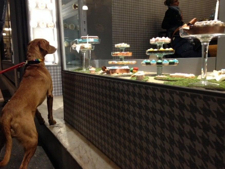 Brescia, arriva la pasticceria per cani: tra i dolci il Candoro e il Canettone