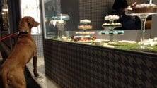 Arriva la pasticceria per cani a Brescia: tra i dolci il Candoro e il Canettone