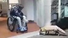 Lo sportivo disabile  e la volpe: 'fox therapy'    all'ospedale di Sondalo