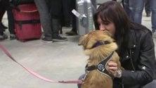 Linate, emozione agli arrivi per la cagnolina Alba: salvata dalle strade della Romania e adottata