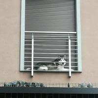 Milano, cane husky rinchiuso nel micro balcone per un giorno intero: la fotodenuncia su Facebook
