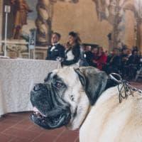 Bergamo, sì ai cani paggetti degli sposi: