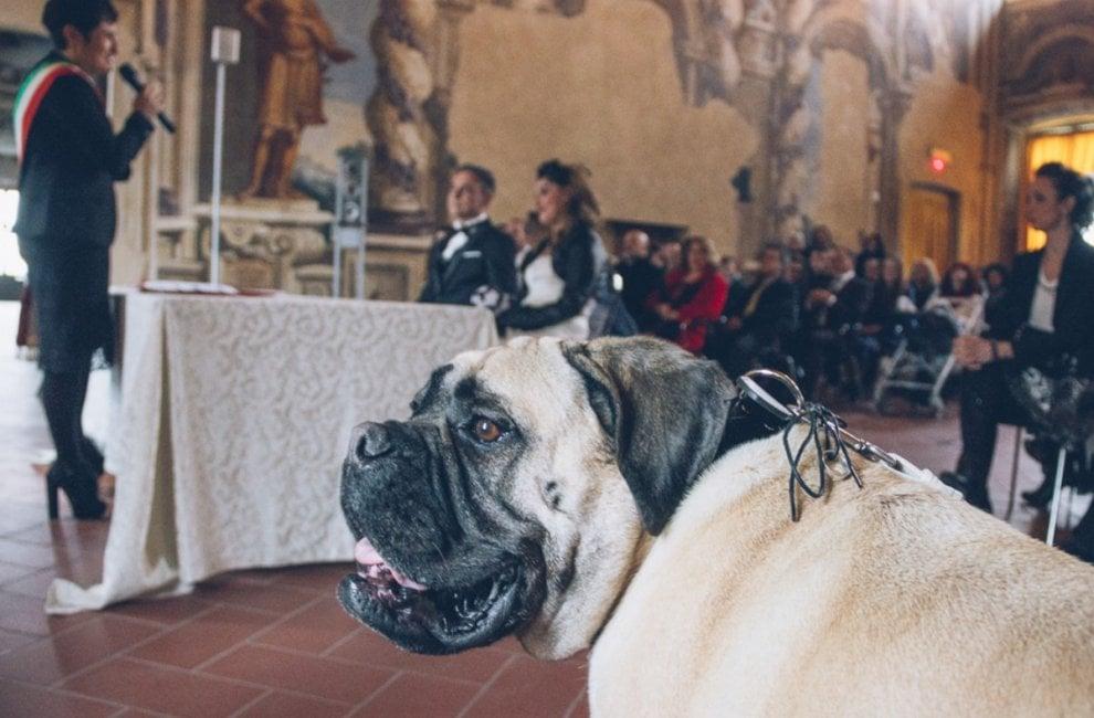 """Bergamo, sì ai cani paggetti degli sposi: """"Fanno parte della famiglia"""""""