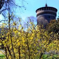 Sole e fiori sbocciati: Milano si gode ventiquattr'ore di primavera