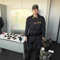 Milano, in Centrale con due chili di hashish nella valigia della moglie: cane antidroga blocca un 30enne