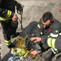 Varese, cane si incastra nel canale di scolo lungo i binari: la fotosequenza del salvataggio