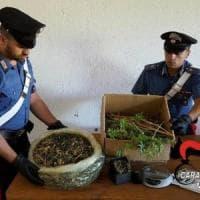 Melegnano: vendeva cannabis illegale,  denunciato il gestore di un negozio