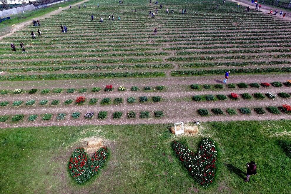 Milano, tutti in posa per una foto ricordo al campo di 350mila tulipani