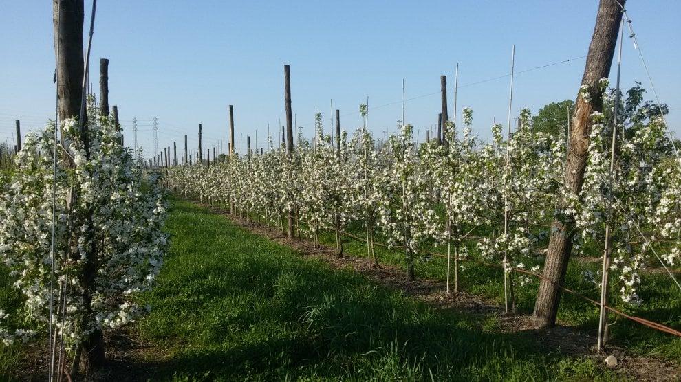 Milano, 2000 piante e 60 varietà di frutta: il campo dove la spesa si fa direttamente dagli alberi