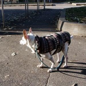 Spaccio nell'area cani: due arresti a Milano, la coca nascosta nel cappottino del meticcio