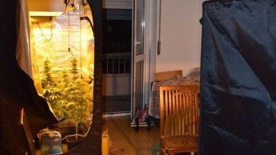 Milano, fioraio  di giorno e coltivatore di marijuana di notte: arrestato