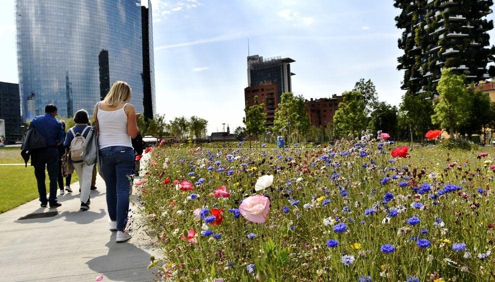 Milano, tra i grattacieli spuntano i fiori di campo: spettacolo alla Biblioteca degli Alberi