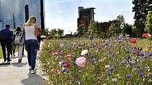 Tra i grattacieli spuntano fiori di campo: spettacolo della natura alla  Biblioteca degli Alberi