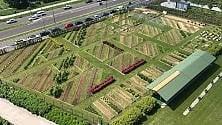 Aprono gli Orti Fioriti:  a Citylife visite guidate  tra fiori e ortaggi