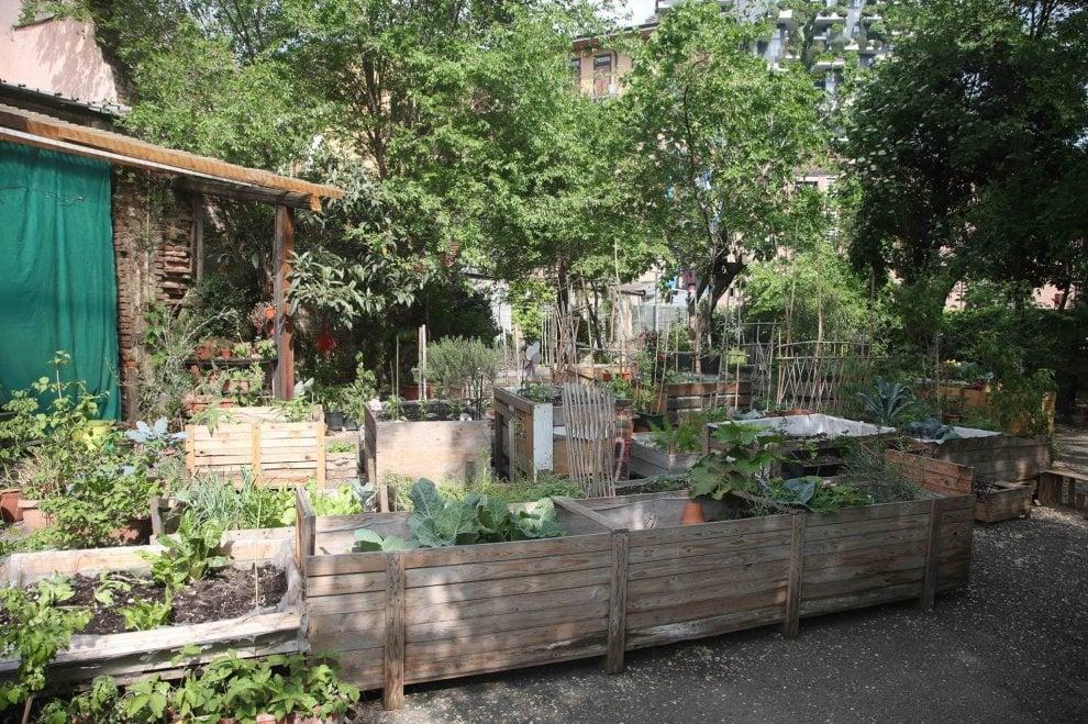 Milano, l'orto condiviso all'ombra dei grattacieli: fotoracconto di 'Isola Pepe Verde'