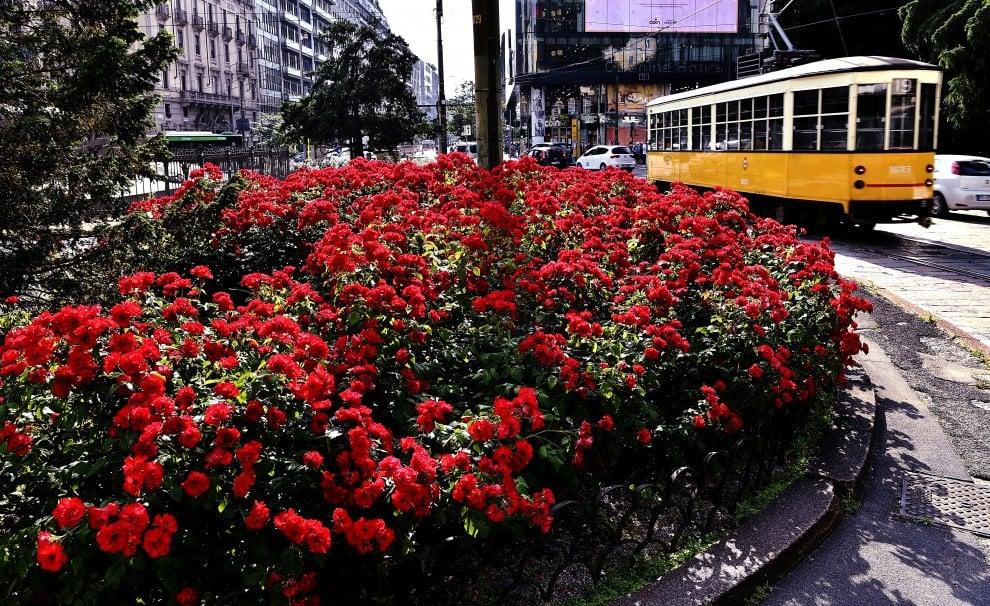 Fioriscono le aiuole, la primavera ingentilisce il traffico a Milano