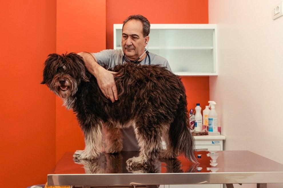 Visite, assicurazione e toelettatura: a Brugherio la clinica veterinaria integrata
