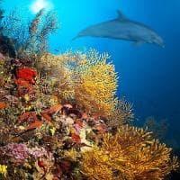 Sui traghetti per studiare lo stato di salute del Mediterraneo: dalla Bicocca