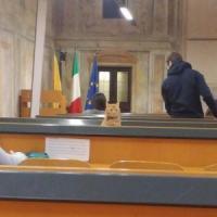 Pavia, allarme pulci all'università: sotto accusa i gatti della colonia felina
