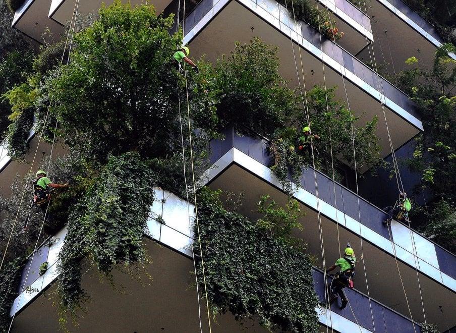 Milano, discesa in corda doppia al Bosco Verticale: lo show dei giardinieri volanti
