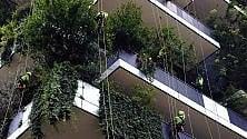 Discesa in corda doppia al Bosco Verticale: show dei giardinieri volanti