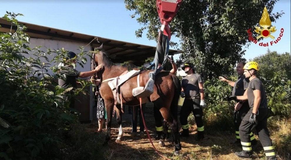 Varese, cavallo cade in una buca: salvato dai vigili del fuoco