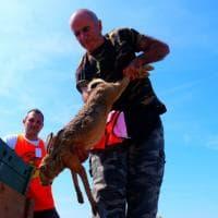 Operazione sicurezza in aeroporto, a Orio al Serio è scattata la 'caccia' alla lepre