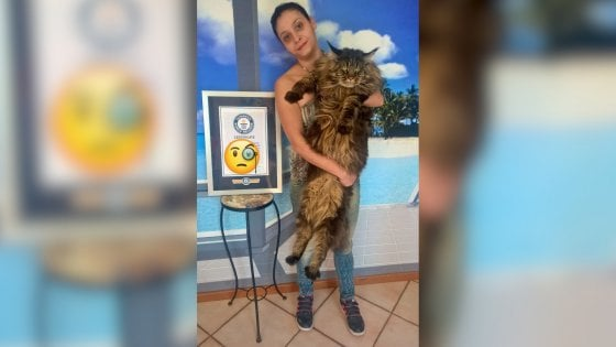 Vive nel Pavese il gatto più lungo del mondo: misura 120 centimetri