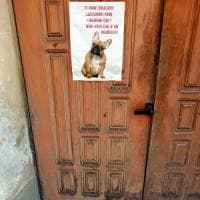 Bisogni sui marciapiedi, quando il cane sgrida il padrone: a Milano spunta un cartello