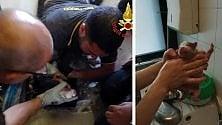 Cucciolo cade nello  scarico: la corsa contro  il tempo dei pompieri  con sonda e telecamera