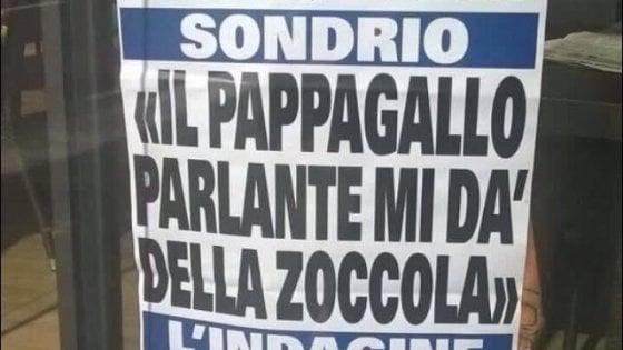 Valtellina, giornale locale racconta la storia del pappagallo stalker: la locandina è virale