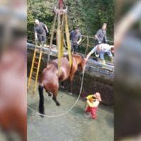 Bergamo, cavallo scivola in un canale: i vigili del fuoco lo salvano con la gru