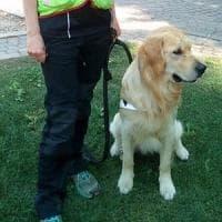 Bergamo, cane da soccorso muore avvelenato. Gli alpini: