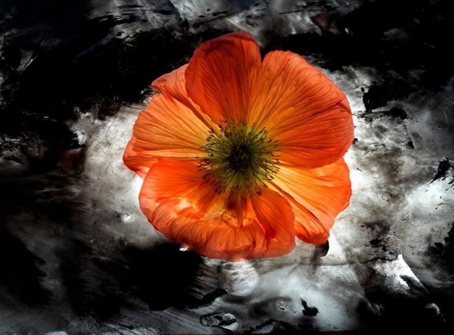 """I fiori diventano opere d'arte: gli scatti di """"Amata bellezza"""" in mostra a Como"""